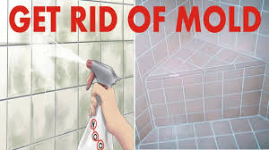 how to get rid of mold 10 proven home remedies for mold removal