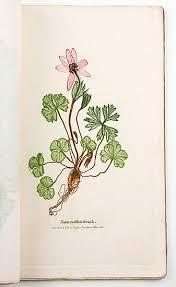 cuisine cagnarde blanche alois auer der polygraphische apparat oder die verschiedenen