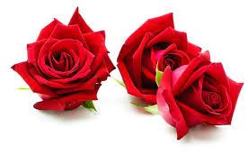 top 7 uses of flower listaka