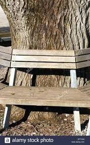 Bench Around Tree Plans Bench Around Tree U2013 Ammatouch63 Com