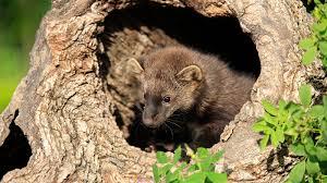 9 wildlife success stories national parks conservation association