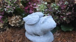 guinea pig concrete