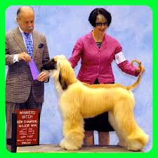 afghan hound club of st louis wins for 2007