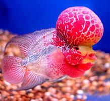 Buy Ornamental Fish Best Aquarium Benefits Of Aquarium Fish Tank Marine Aquarium Fish