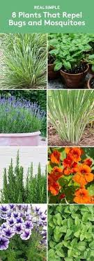 how to keep bugs away from porch 21 best ways to keep mosquitoes away from you your home garden