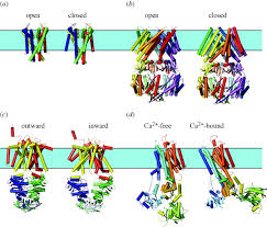 lipid bilayer regulation of membrane protein function gramicidin