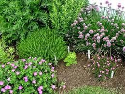 diy herb garden spice up your bob vila