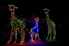 National Zoo Lights by The East Bay U0027s Best Holiday Events Holiday Guide Oakland