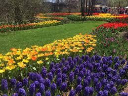 Botanical Garden Cincinnati Zoo Blooms Picture Of Cincinnati Zoo Botanical Garden