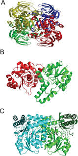 thermophilic archaeal enzymes and applications in biocatalysis