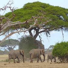 yoruba people the africa guide ashanti people