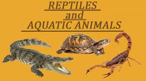 learn the name of reptiles u0026 aquatic animals youtube