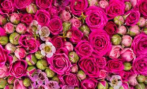 Birth Flowers By Month - quelle est ma fleur de naissance éclosion