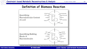 genome scale metabolic reconstructions ppt download