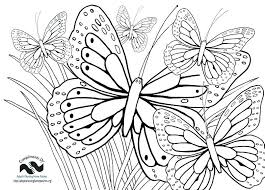 detailed butterfly coloring pages for adults coloring butterflies vred coloring