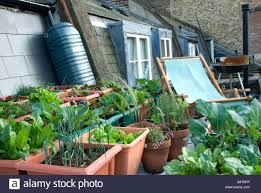 Urban Veggie Garden - urban veggie garden home decorating interior design bath