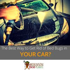 The Best Way To Kill Bed Bugs What Is The Best Way To Get Rid Of Bed Bugs In Your Car