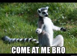 Come At Me Bro Meme Generator - come at me bro swag lemur meme generator
