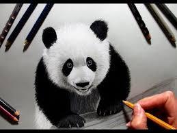 speed drawing panda jasmina susak youtube