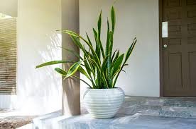the best houseplants for low light spaces
