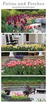 19 best perfect flower combos images on pinterest spring bulbs