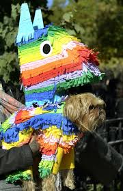 city park halloween dog halloween costume parade packs in pups in new york city