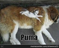 Puma Meme - puma coat by shawnce22 meme center