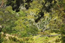 hawaii native plants 200 birds hawaii u0027s native forest birds