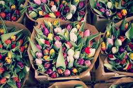 florists in florists in mcdonough il mcdonough county voice