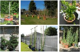 Hops On Trellis Growing Your Own Hops The Complete Guide