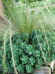 ornamental grass archives southern krazed