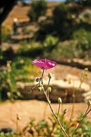 slo botanical gardens san luis obispo county visitors guide
