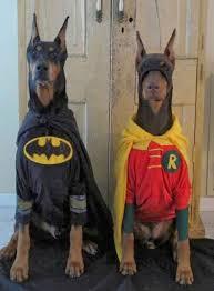 Chihuahua Halloween Costumes Cute Dog Halloween Costumes