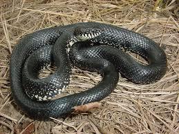 wkdz 106 5 fm snakes love warm temperatures