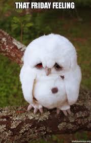 Feeling Sad Meme - that friday feeling sad owl make a meme