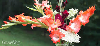 Gladiolus Flowers Growing Cut Flowers For Bouquets