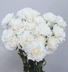Wholesale Carnations Jl Fresh Wholesale Flowers Carnations