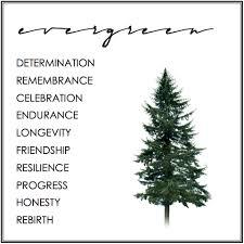 tree symbolism evergreen tree symbolism symbolism pinterest spiritual