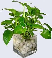 Indoor Flower Plants 481 Best Indoor Flowers U0026 Plants Images On Pinterest Gardening