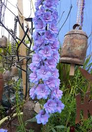 103 best blue garden images on pinterest blue garden flowers