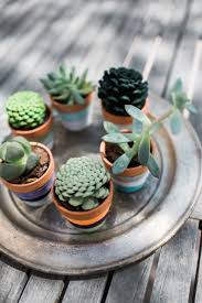 how to make faux succulents from pine cones muy bueno cookbook