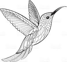 coloring page hummingbird stock vector art 626349766 istock