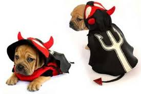 Ghost Dog Halloween Costumes by Dog Halloween Costumes Best Halloween Costumes For Dogs