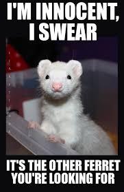 Ferret Meme - http weknowmemes com generator uploads generated