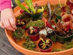 carnivorous plants make a fun garden for kids hgtv