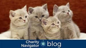 Pet Charity Navigator Charity Navigator U0027s Top 10 Tuesday Highly