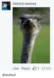 Ostrich Meme - 25 best memes about ostrich meme ostrich memes