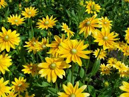 Long Blooming Annual Flowers - 15 annuals for cut flowers hgtv