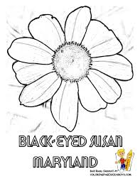 states flower printables maine montana free flower drawings