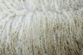 How To Clean Wool Area Rugs by How To Clean A Wool Rug